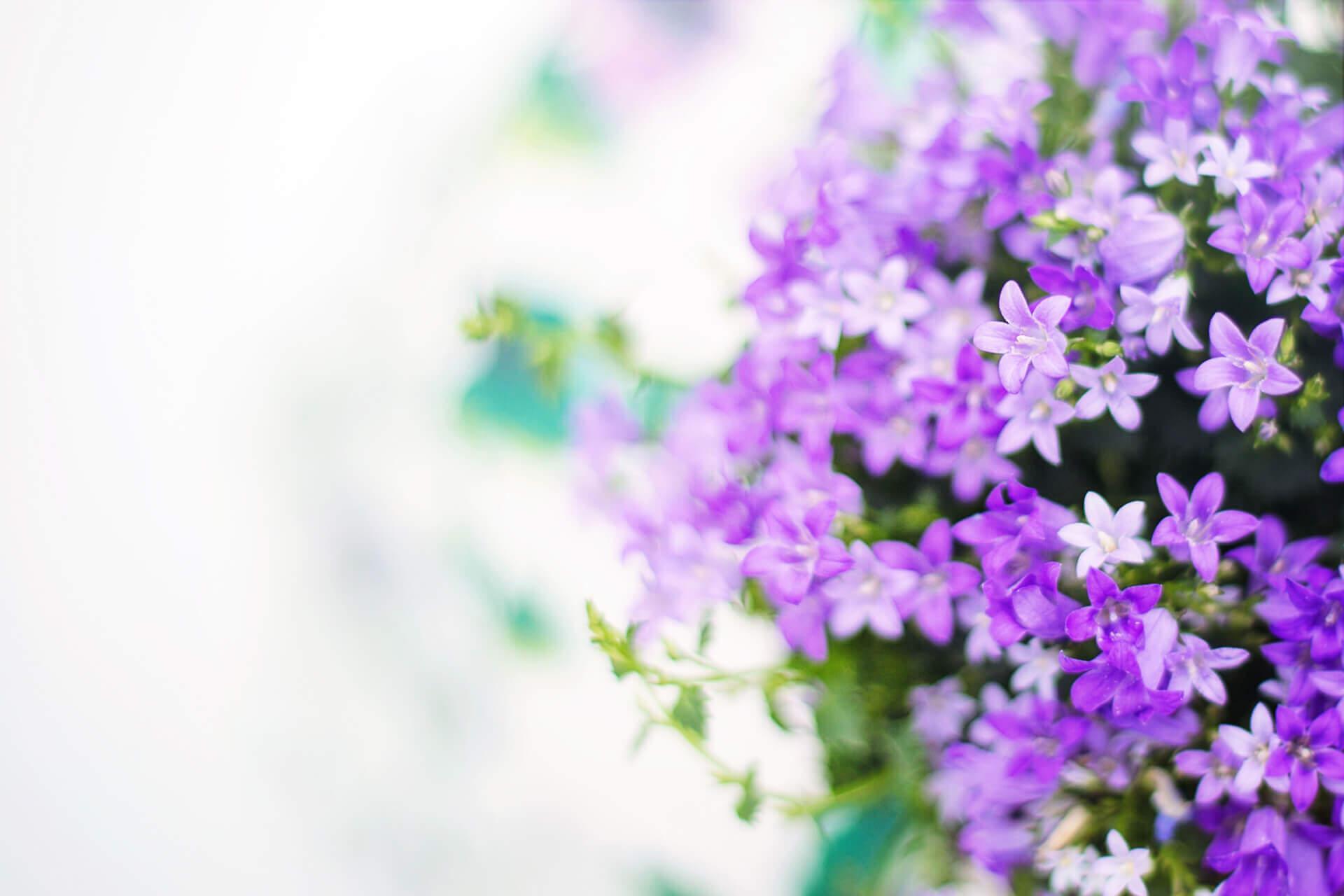 Flerårige planter