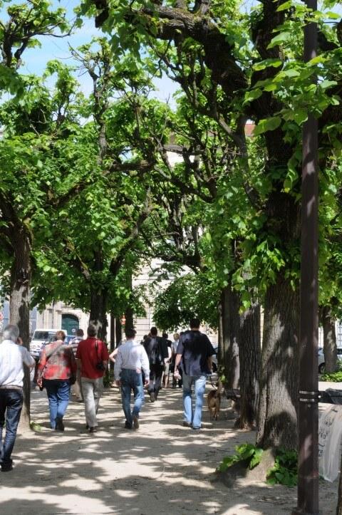 Kimaat en groen in de stad
