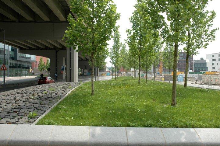 Bomen aan de Vaartkom in Leuven