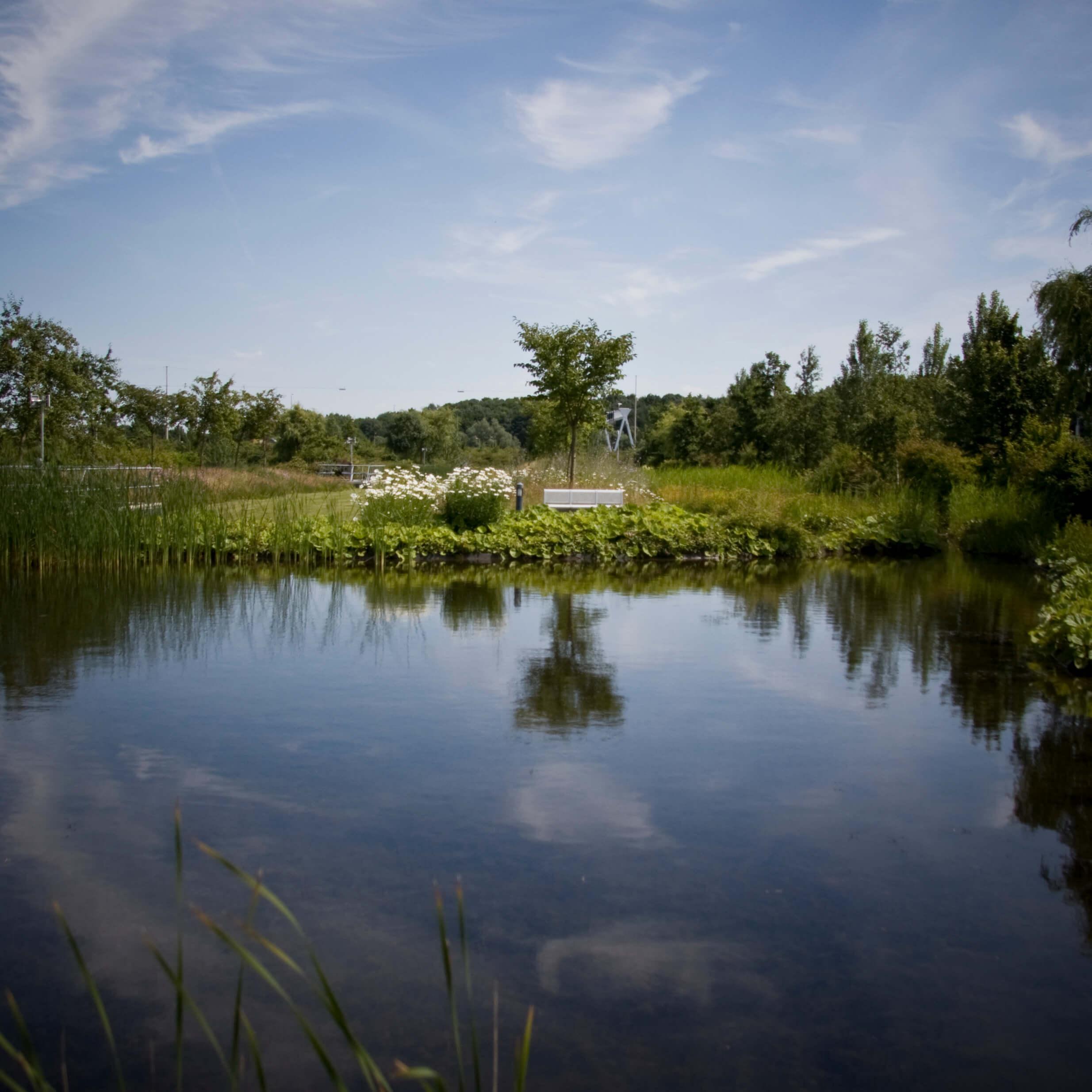 EPO vijver daktuin | Foto: Copijn