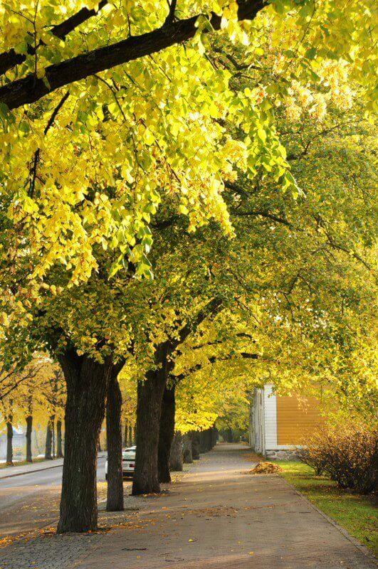Betere klimaatbomen