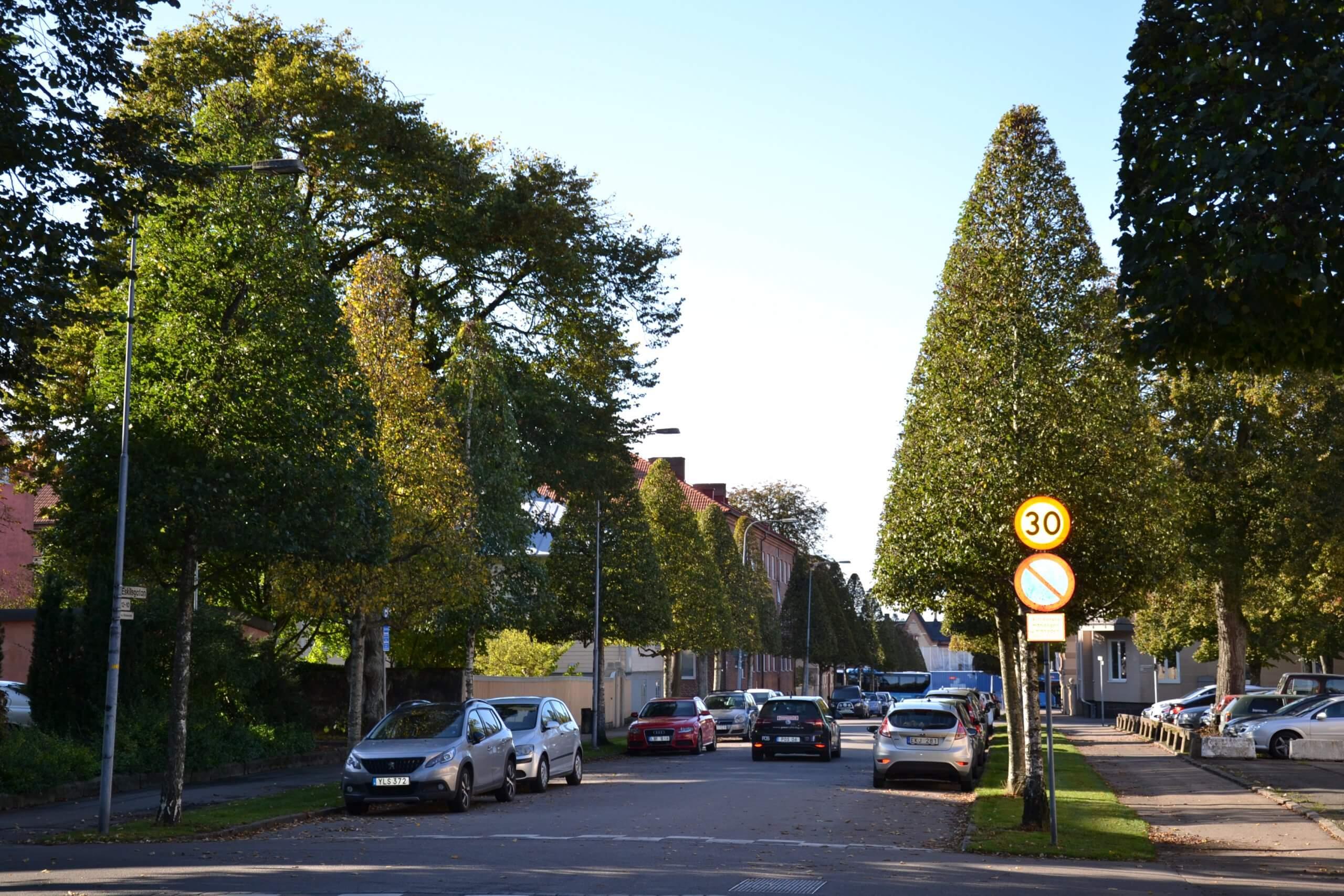 Stadsträden sparar pengar åt samhället