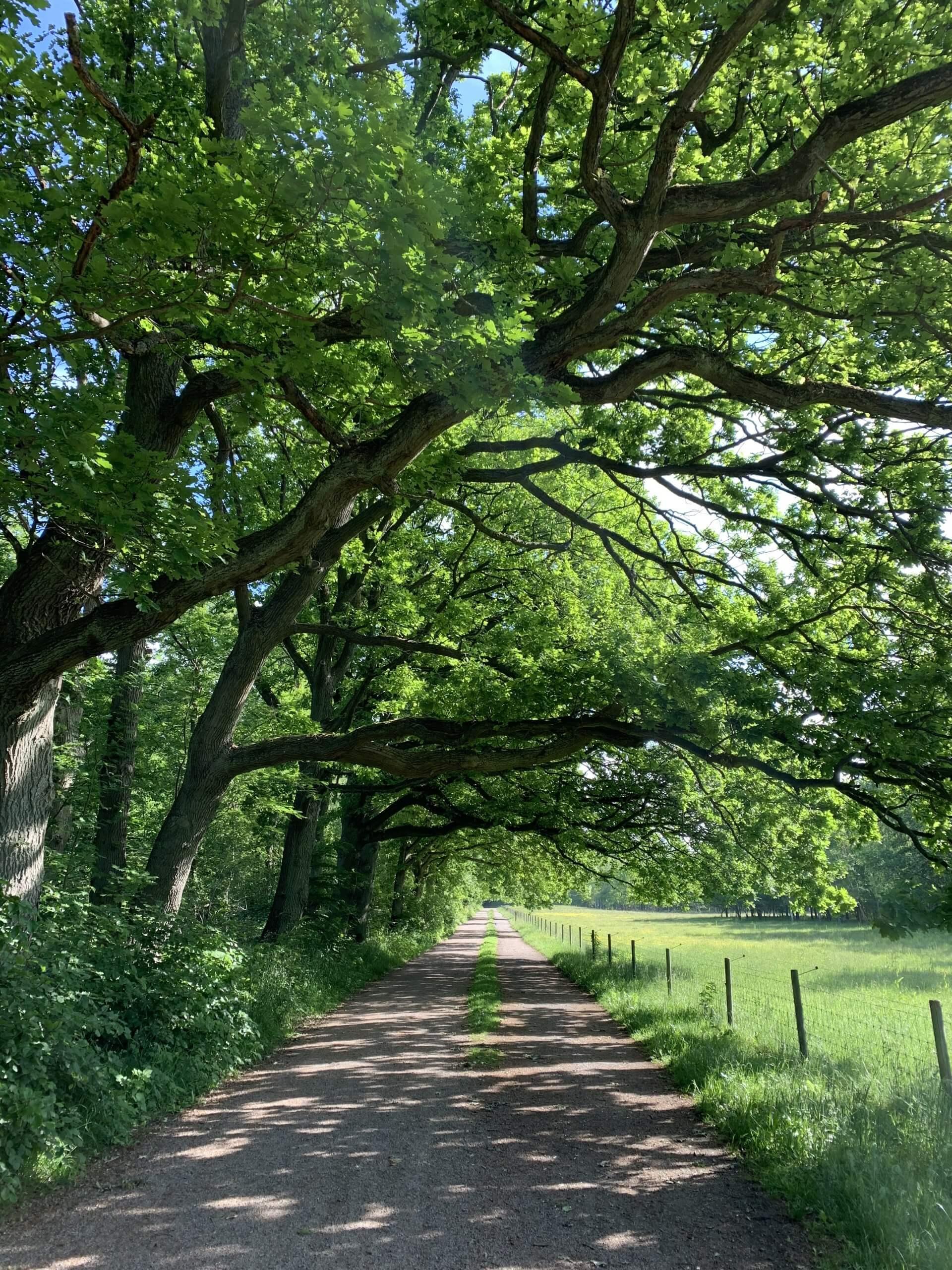 Quercus in a park